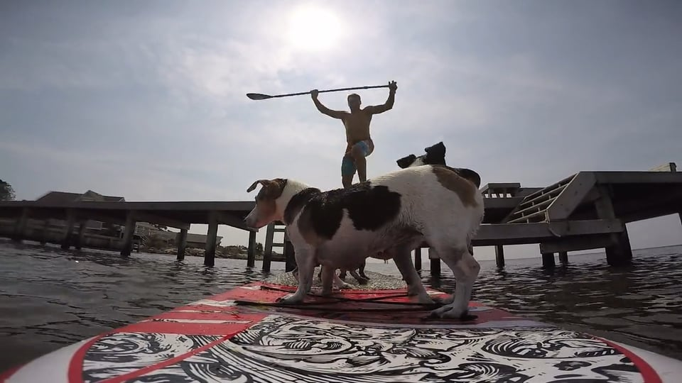 Dogs love sup boards - with Epic Kites Kiteboarding