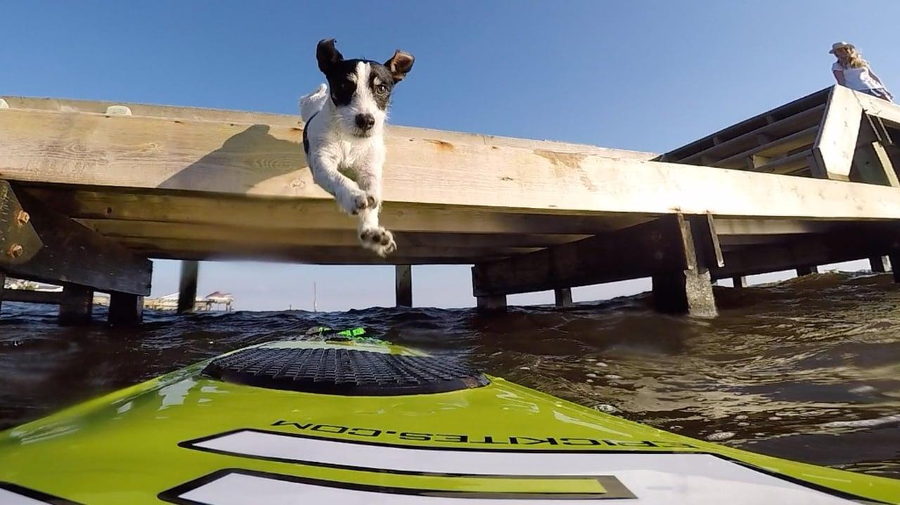 Epic Dog kiting - with Epic Kites Kiteboarding