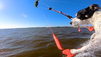 The Kitesurfing Dog