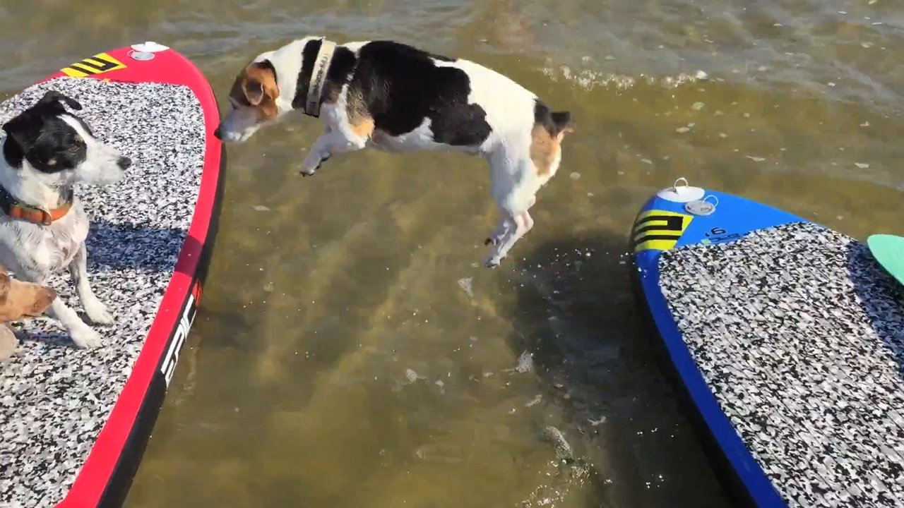 Sup with dogs - with Epic Kites Kiteboarding