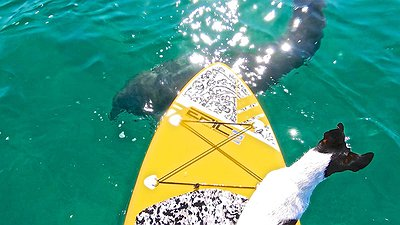 SUPing with wild life