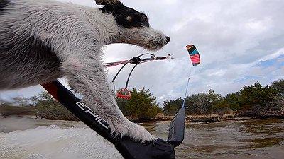 ZEUS the Surfing & Kitesurfing dog