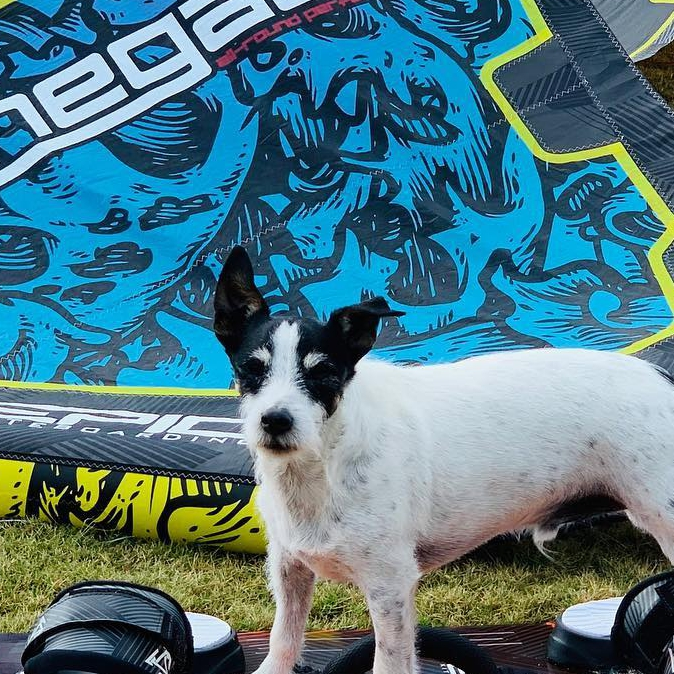Zeus the kiteboarding dog getting ready for an afternoon epic session on his EPICKITES quiver. #kitesurfing #kiteboarding #epickites #dogsofinstagram #dogs