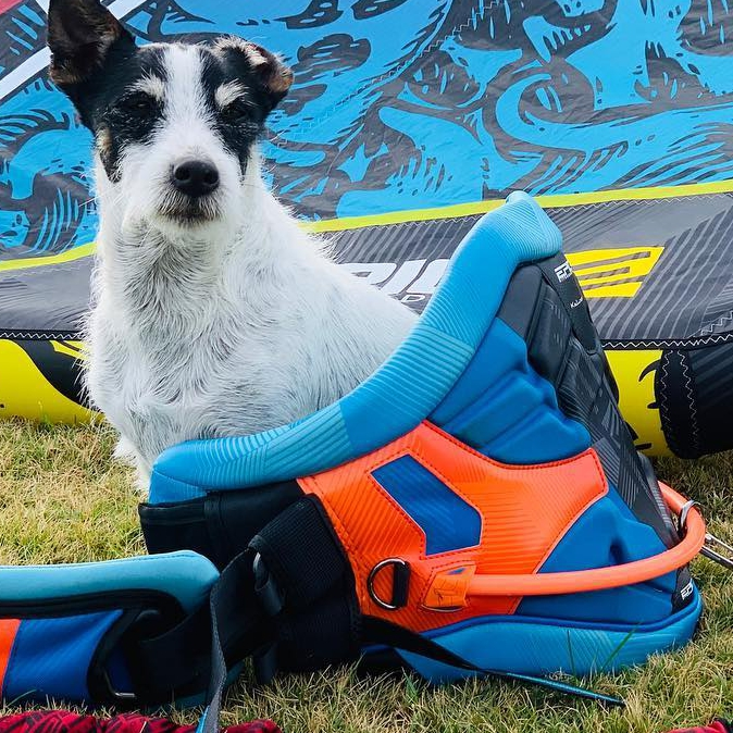 Choosing the perfect gear is always a good thing to be happy about.  WWW.EPICKITES.COM #kitesurfing #kiteboarding #dogs #dogstagram