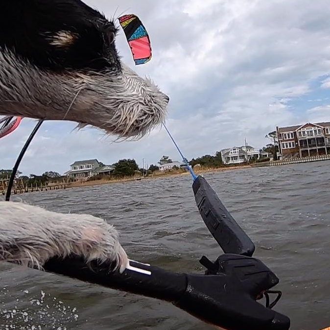 Focus and determination.  Zeus the dog having an epic session kitesurfing on the RENEGADE 7m and DROID board. This is what I call an epic dog's life. #epickites #dogsofinstagram #dogs #kitesurfingworld #crazydog